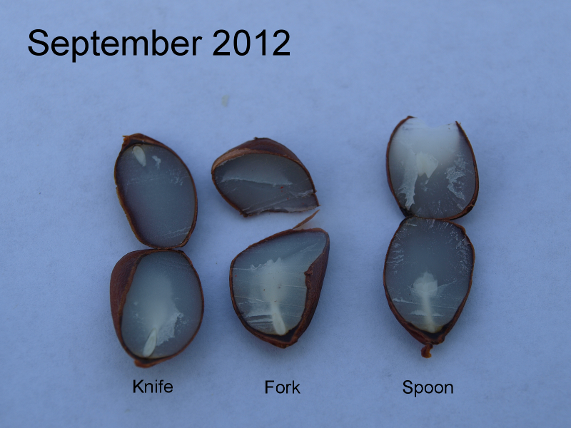 Persimmon Result 2012